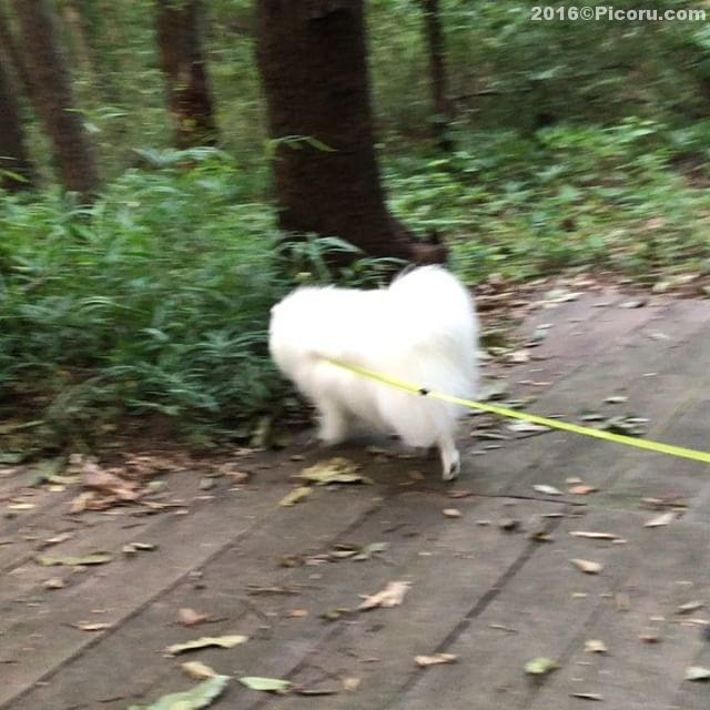 涼しげな公園で散歩の後はいもフライ〜めちゃうま!
