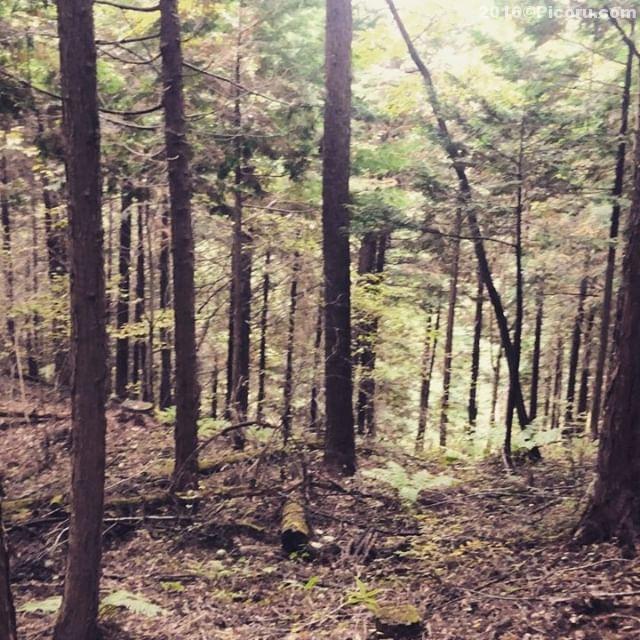 So-netの森を散策#いきつけの田舎#いきつけの田舎Touch#Touchstagram
