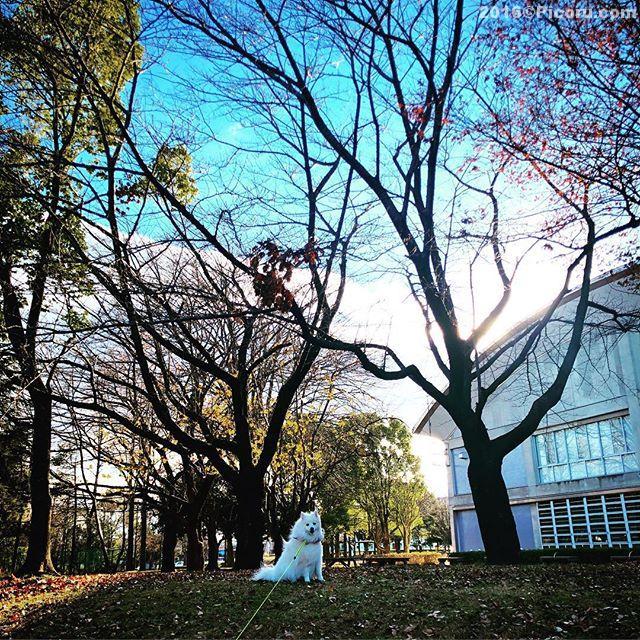 寒かった〜いつもの場所で散歩#日本スピッツ#犬バカ#日本犬#spitz