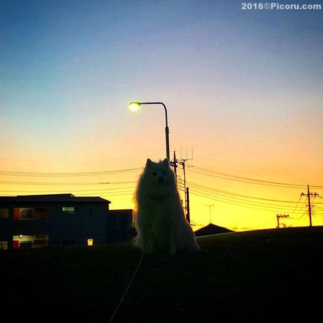 今日は暖かかった!もうちょい早めに散歩行けば良かった〜寒くなってきた。