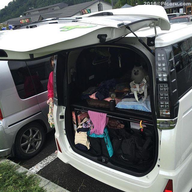 明日からキャンピングカーショー行けたら土曜日に行こうかな?#くるま旅フォト#キャンピングカー